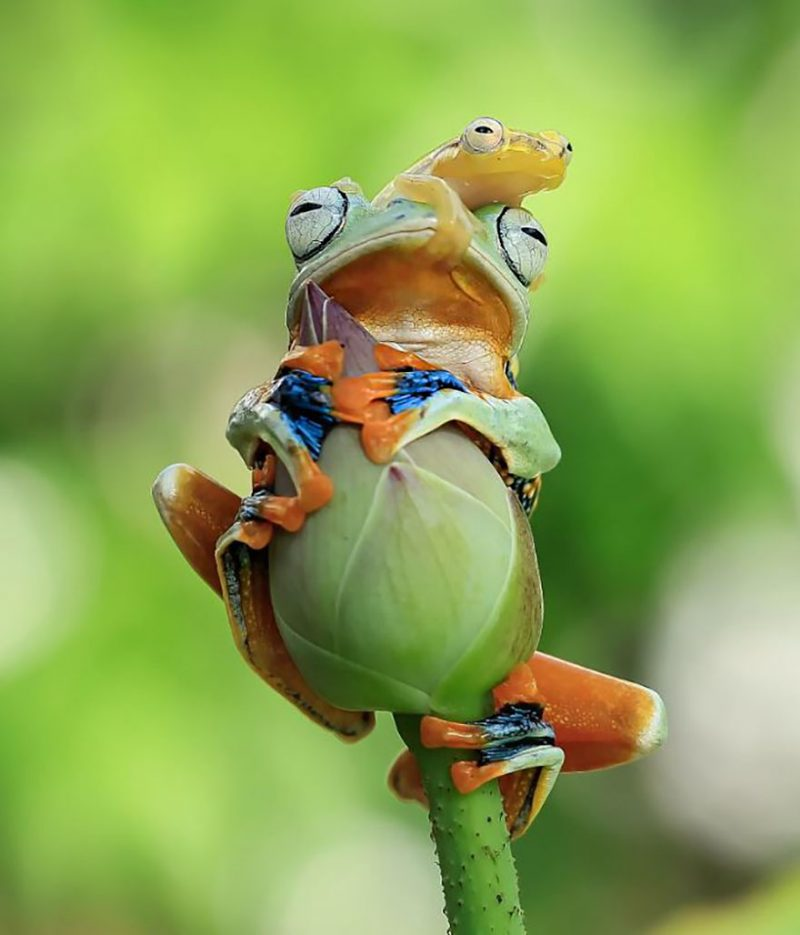 nature-photography-funny-frog-pictures-11