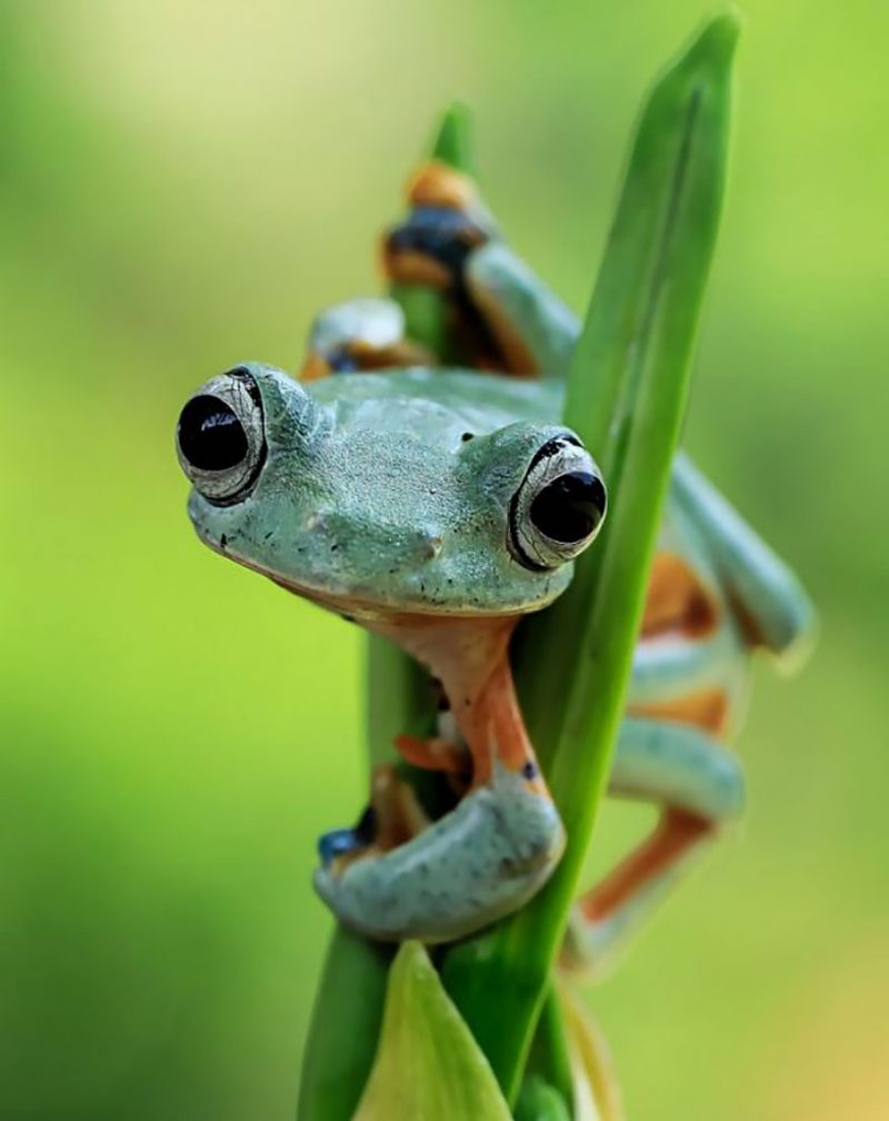 nature-photography-funny-frog-pictures-12