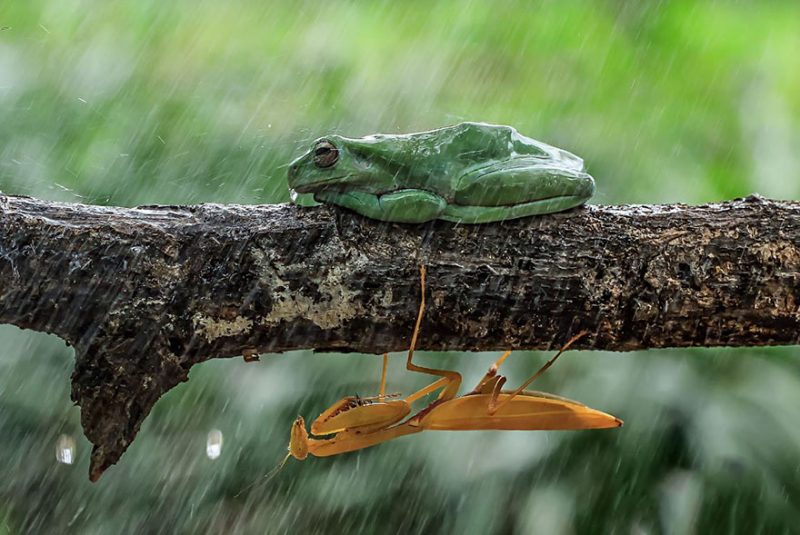 nature-photography-funny-frog-pictures-15