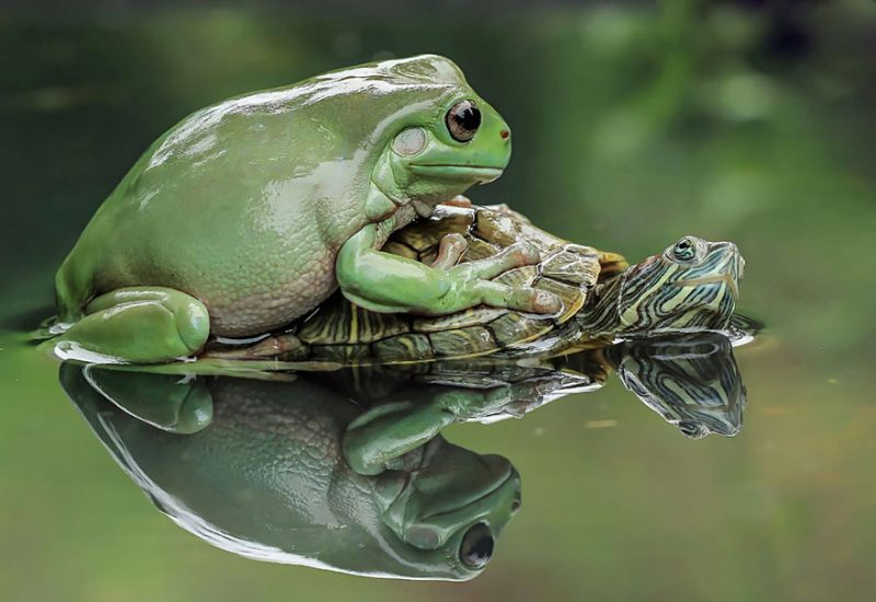 nature-photography-funny-frog-pictures-16