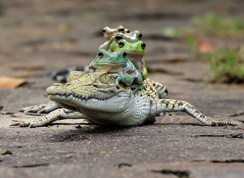 nature-photography-funny-frog-pictures-17