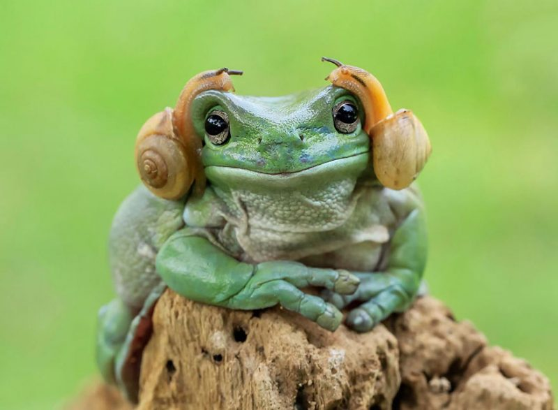 nature-photography-funny-frog-pictures-2