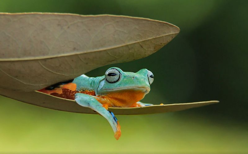 nature-photography-funny-frog-pictures-3