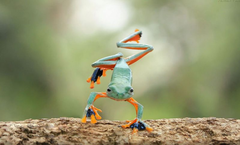nature-photography-funny-frog-pictures-4