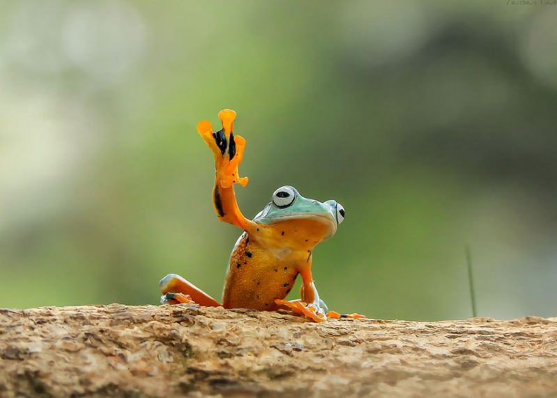 nature-photography-funny-frog-pictures-5