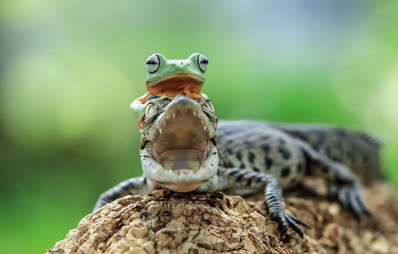 nature-photography-funny-frog-pictures-8