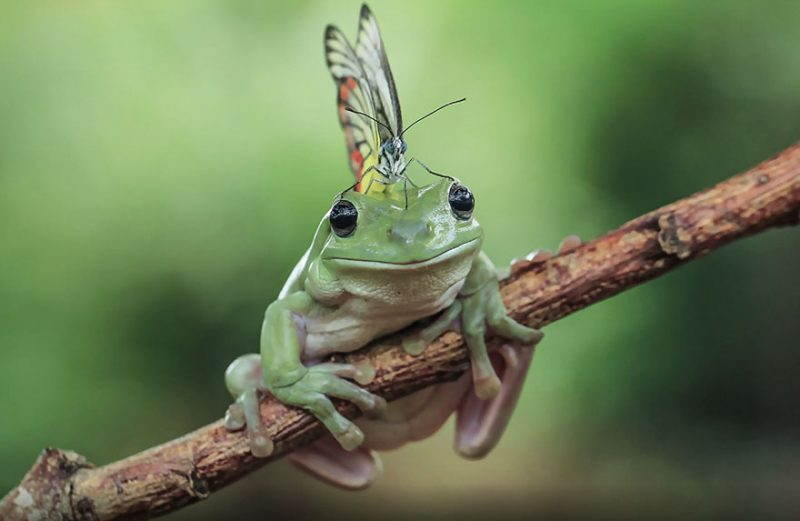 nature-photography-funny-frog-pictures-9