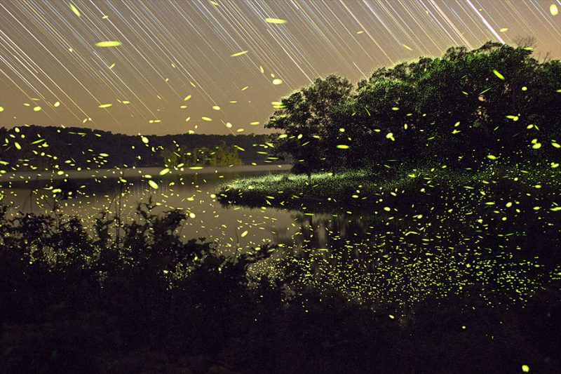 stunning-beautiful-firefly-time-lapse-photography-light-track-1