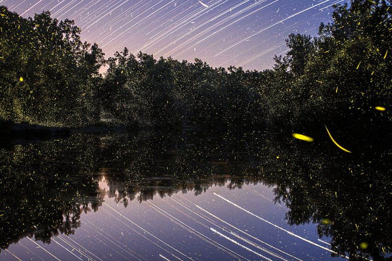 stunning-beautiful-firefly-time-lapse-photography-light-track-12