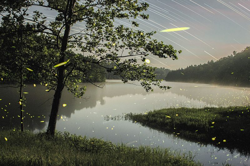 stunning-beautiful-firefly-time-lapse-photography-light-track-2