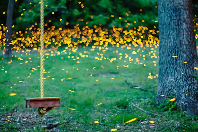 stunning-beautiful-firefly-time-lapse-photography-light-track-5