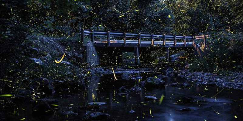 stunning-beautiful-firefly-time-lapse-photography-light-track-7