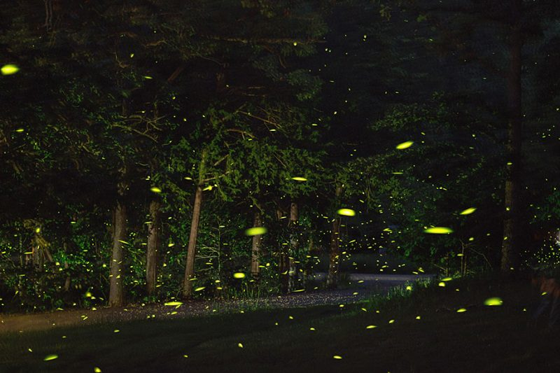 stunning-beautiful-firefly-time-lapse-photography-light-track-8