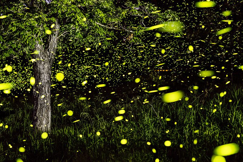 stunning-beautiful-firefly-time-lapse-photography-light-track-9
