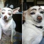 When dogs are painted fake eyebrows