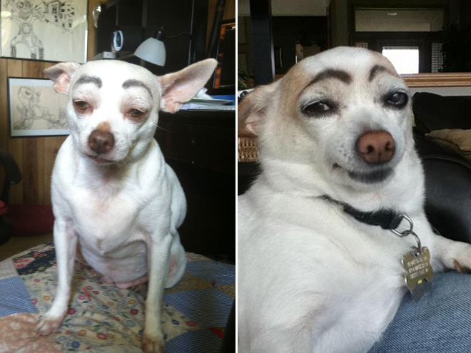 Dogs with eyebrows is a new trend that goes viral on the