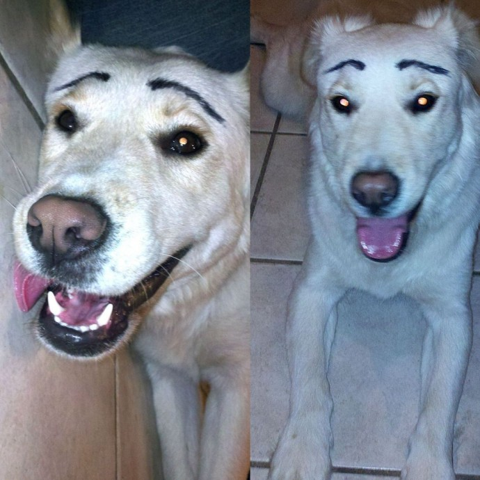 When Dogs Are Painted Fake Eyebrows Vuing Com