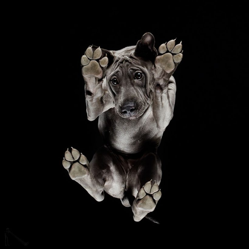 Watch Dogs From Below Vuingcom - Hilarious photographs dogs floating mid air