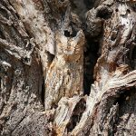 After watching this incredible list of animal camouflage you cannot help admiring the amazing of nature