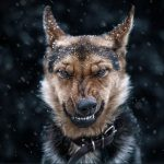Beautiful animal close-ups by Ukrainian photographer Sergey Polyushko