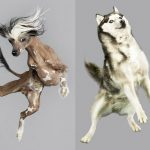 Funny photographs of airborne dogs in mid-air