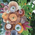 Beautiful artworks of mushroom arrangements