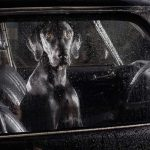 Sad and lonely dogs when they're locked in cars