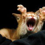Cute snapshots of yawning animals
